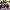 Aydın'da cenaze evinde kavga: 1 ölü, 2 yaralı