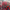 Pakistan'da muhalefetin hükümet karşıtı protestoları devam ediyor