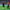 Süper Lig: Galatasaray: 0 - Trabzonspor: 1 (İlk yarı)