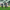 Adem Ljajic, 26 hafta sonra golle buluştu